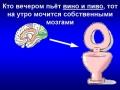 мозги в унитаз